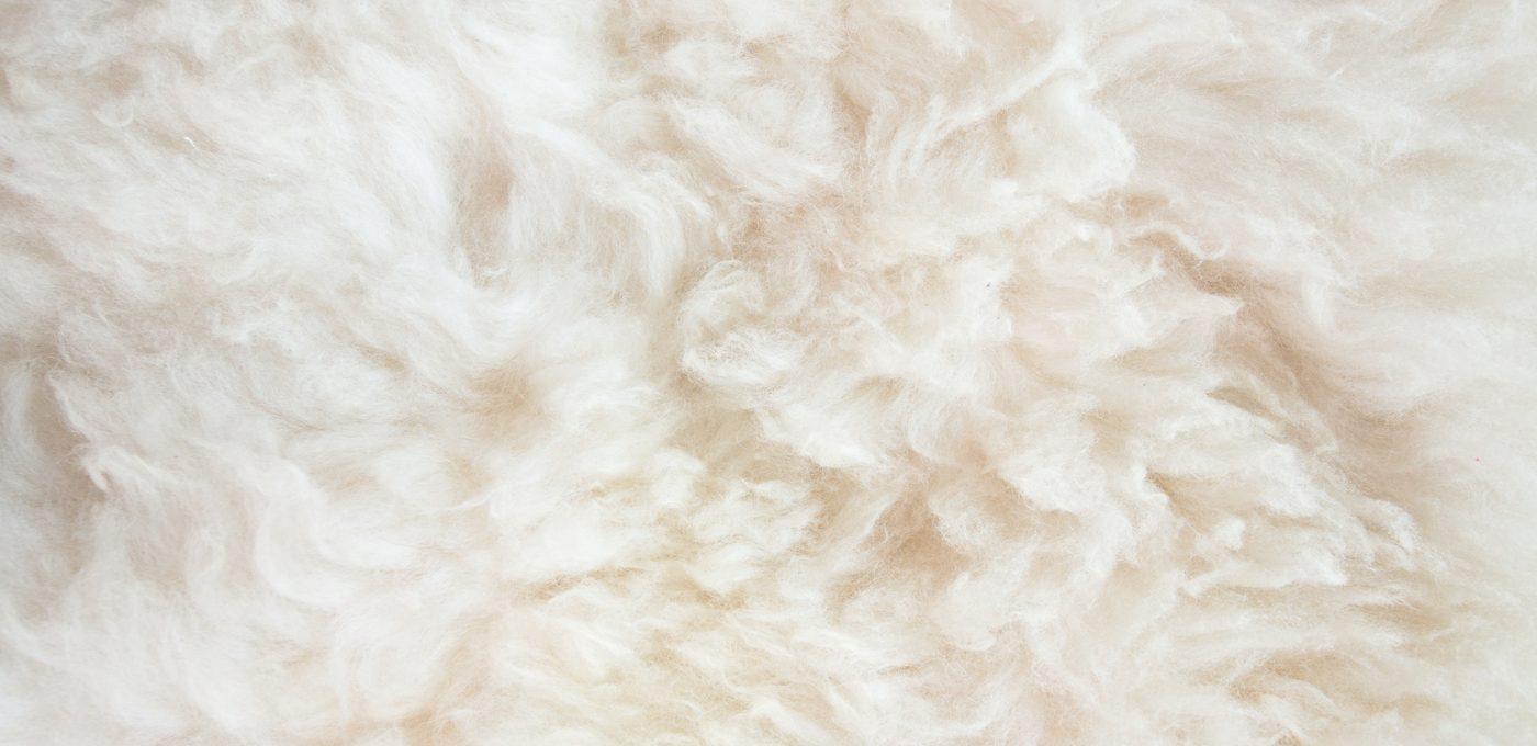 Laine-de-mouton
